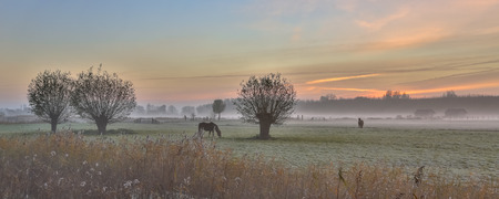 Pollard willows and horses in dutch agricultural landscape at sunrise in november