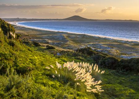 正面に砂丘と北の島 Toetoe の Rangiputa (Cortaderia Toetoe) との疑いのない湾と火山との夕日