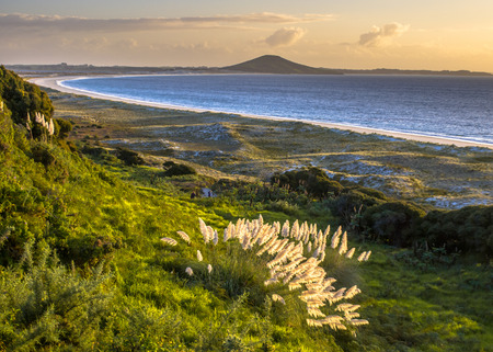Sunset over Doubtless bay and Rangiputa volcano with dunes and North island Toetoe pampas grass  (Cortaderia toetoe) in front
