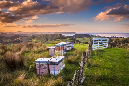 Colmenas de abeja en muchos colores en paisaje montañoso en Bay of Islands Nueva Zelanda
