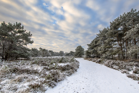 Winter forest landscape with snow and hoarfrost on grass and trees in Baggelhuizen nature reserve in Assen, Drenthe