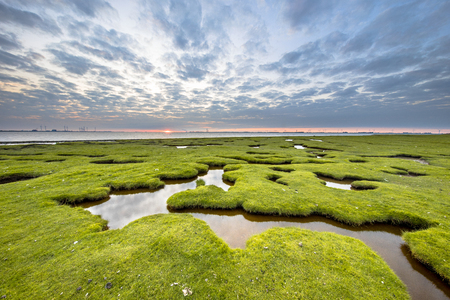 Erosion holes in the tidal marsh of Dollard at the Punt van Reide in the Waddensea area on the Groningen coast in the Netherlands