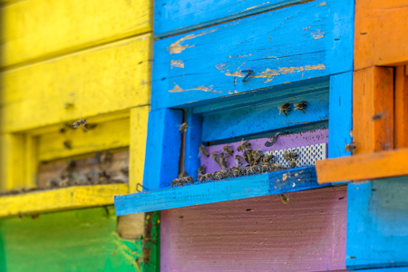 Close up of Colorful beehives in many different colors on truck Reklamní fotografie