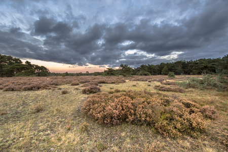 Sunset over heathland in Hoge Veluwe National Park in province Gelderland, the Netherlands