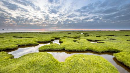 Erosiegaten in grasland van schor Dollard bij de Punt van Reide in het Waddengebied aan de Groningse kust in Nederland