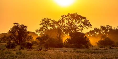 Oranje ochtendlicht over savanneboom en struik in het nationale park Zuid-Afrika van Kruger Stockfoto