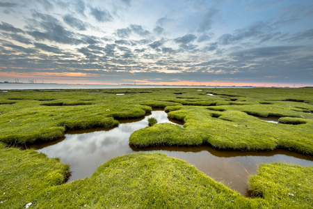 Erosion holes in the tidal marsh meadow of Dollard at the Punt van Reide in the Waddensea area on the Groningen coast in the Netherlands Stock Photo