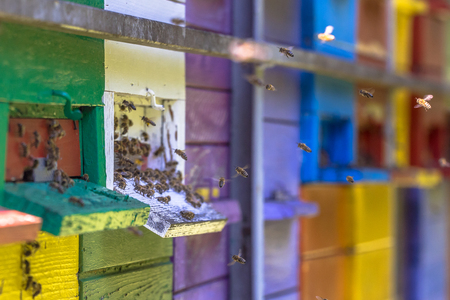 Bees flying to Colorful beehives in many different colors on truck Standard-Bild