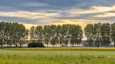 Traditional countryside scene in the Netherlands with old farms and windbreak lane of poplar trees in the wind under summer sky in Zeews Vlaanderen, Zeeland. Stock fotó