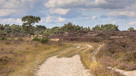 Landscape of Kalmthoutse Heide heathland nature reserve in Belgium on a sunny cloudy day 版權商用圖片