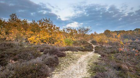 Footpath through heathland in yellow autumn colors on an evening in november. Gasteren, Drenthe, the Netherlands 版權商用圖片