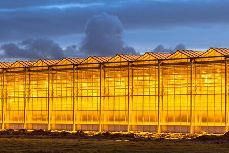 Illuminated industrial greenhouse with yellow lights and blue sky in Westland area Netherlands