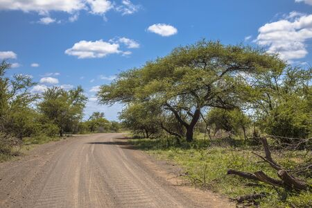 Washboard texture in Timbavati gravel road in Kruger national park South Africa