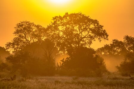 Orange morning light through savanna tree and bush on famous S100 road in Kruger national park South Africa