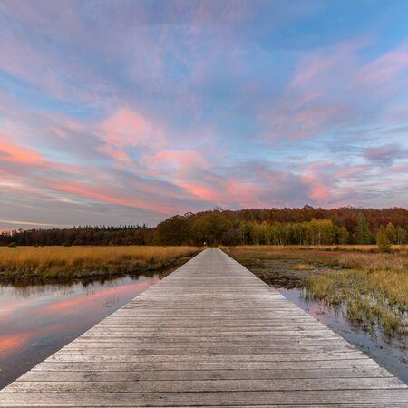 Boardwalk in heathland fen nature reserve landscape  in province of Drenthe, Netherlands