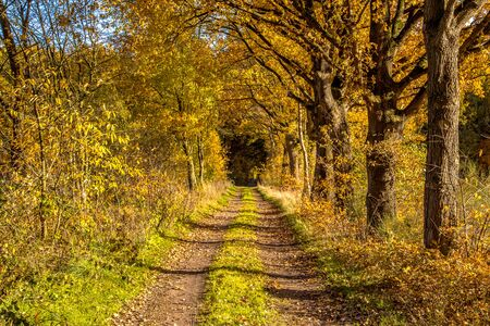 Rural autumn lane with yellow foliage on dutch countryside Banque d'images - 130816967