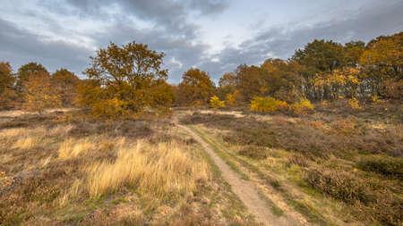 Hiking trail through heathland on an evening in November under autumn colored light. Gasteren, Drenthe, the Netherlands
