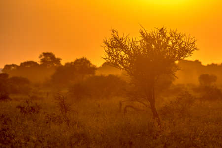 Orange morning light over savanna tree with bird and bush on S100 road in Kruger national park South Africa
