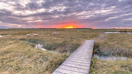 Boardwalk in Tidal Marshland nature reserve Drowned land of Saeftinghe in Province of Zeeland. Netherlands