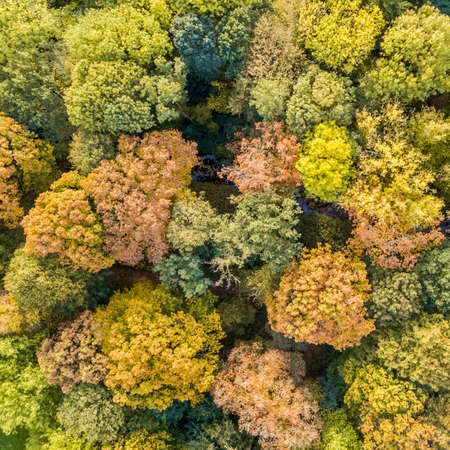 Aerial top down view of city park in October autumn colors, Netherlands, Europe 免版税图像