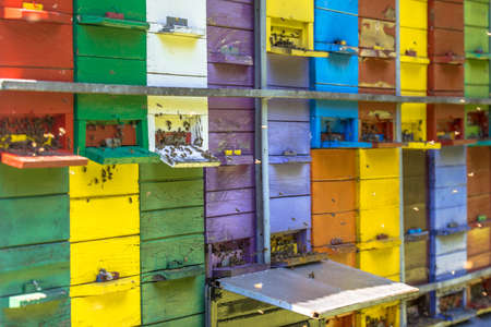 Colorful beehives in many different colors on truck 免版税图像