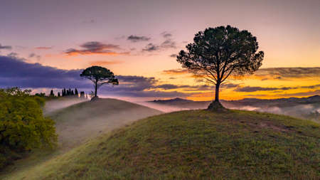 Dreamy landscape with rolling hills, cypress trees and morning fog at sunrise in Tuscany, Italy, April.