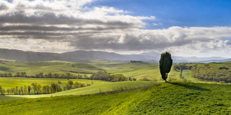 Lonely Cypress tree on hilltop in Val d'Orcia Tuscany, Italy, April.