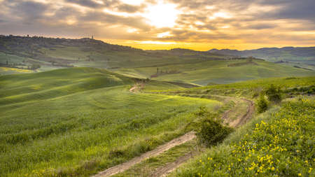 Dirt track in tranquil landscape with groups of trees in the rolling hills of Val d'Orcia Tuscany, Italy, April.
