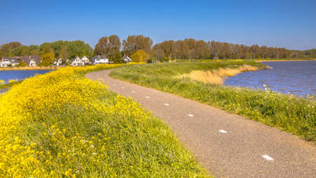 Bicycle track without cyclist on a dike with lot of yellow flowers near the village of Monnickendam in the Netherlands on a sunny day Zdjęcie Seryjne