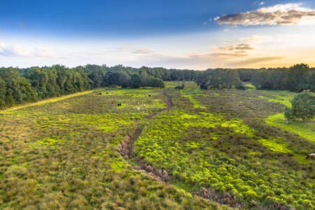 Aerial view of wetland scene in river valley of Geeserstroom near Gees, Drenthe Province, the Netherlands.
