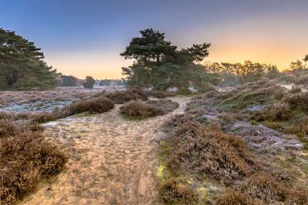Heathland in hilly terrain on a cold morning with hoarfrost in november, Drenthe Province, the Netherlands. Landscape scene in nature of Europe,