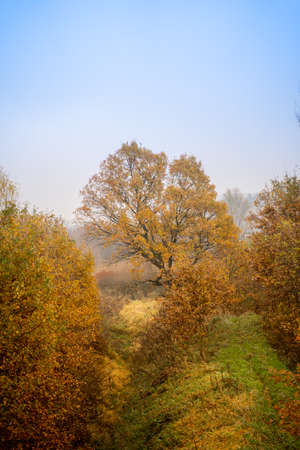 Orange and brown autumn tree leafs foggy morning in the country side