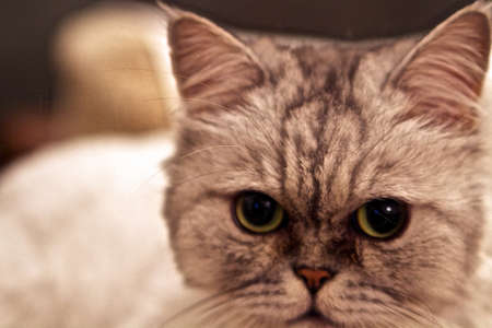 Big eyes in a cat come out in the evening or when low light conditions are present.