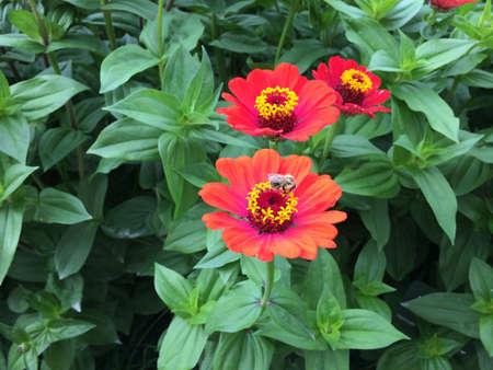 Bee on a spring flower feeding. Flowers detail Banco de Imagens