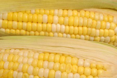 corn on the cob background photo