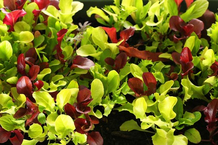 microgreens upclose