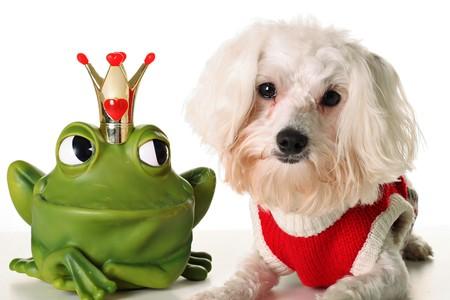 prince charming: Prince charming Pup