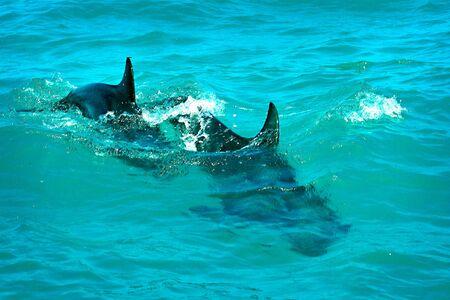 Double dolphin swim