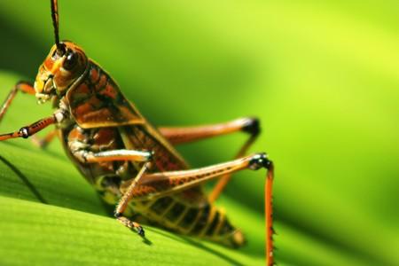 grasshopper Reklamní fotografie