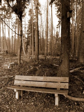 Lonely bench in forest with bird house photo