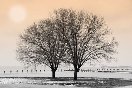 winter blues: Winter scene with trees by the lake