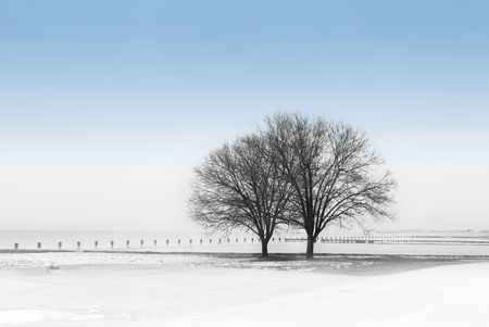 Winter scene with trees by the lake Stock Photo - 764253