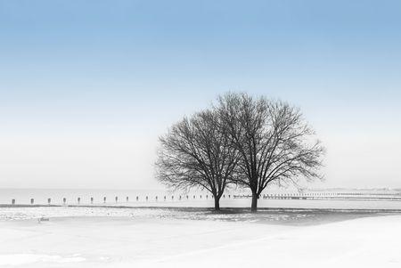 Winter-Szene mit B�umen am See