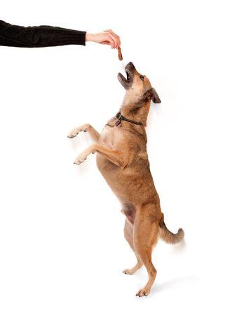 Formateur canine détenant un animal de compagnie traiter pour atteindre le chien  Banque d'images - 5772714