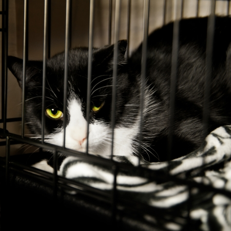 Homeless Cat - Rescued Feline in Cage recovering from Surgery photo