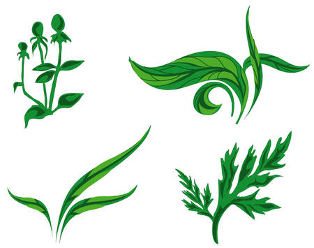 petiole: Some different kinds of green plants, biology, illustration