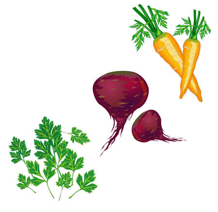 useful: Illustration of fresh green vegetables, parsley, carrot, beet