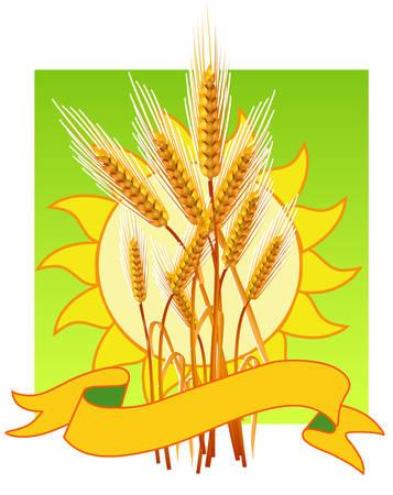 thresh: Maduros de color amarillo trigo o�dos, agr�colas ilustraci�n, plantilla