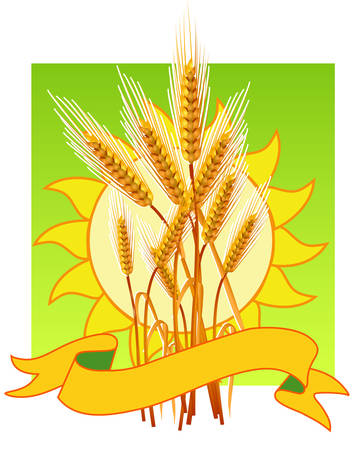 thresh: Ripe yellow wheat ears, agricultural illustration, template