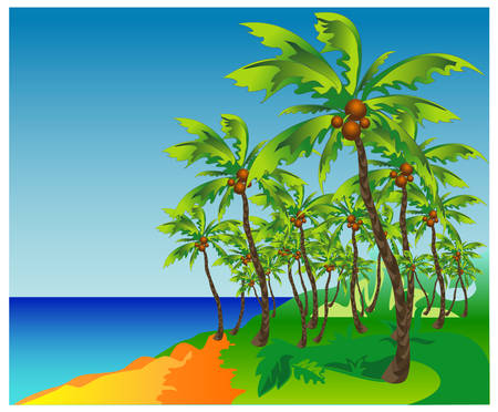 beach sunset: Palm beach - highly detailed cartoon background, tropical vacation, vector illustration Illustration